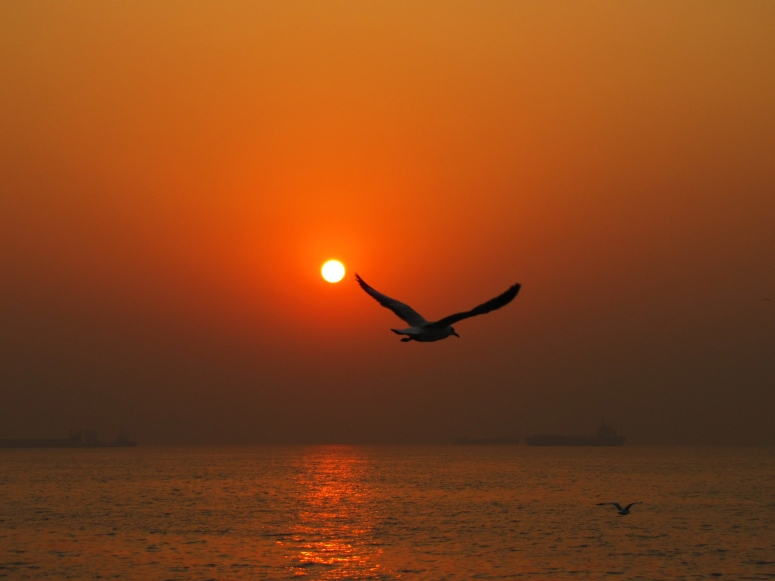 flight_into_sunset
