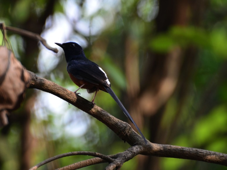 shama_karnala_bird_sanctuary